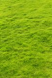 A vertical frame of green grass meadow. A vertical frame of green grass meadow-natural and environmental landscape photo royalty free stock photo