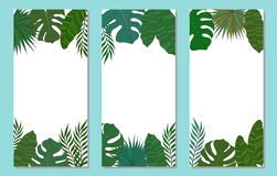 Vertical frame of palm tree leaves. Tropical card or banner. Royalty Free Stock Photography