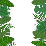 Vertical frame of palm tree leaves. Tropical card or banner. Stock Images