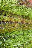 The vertical garden Stock Image