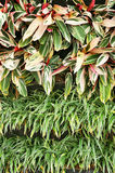 Vertical garden. Small plant in vertical garden Royalty Free Stock Images