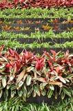 Vertical garden. Small plant in vertical garden Royalty Free Stock Image