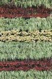 Vertical garden. Ornamental plants in vertical garden Royalty Free Stock Images