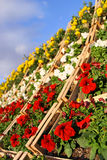 Vertical garden Stock Image