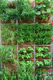 Vertical garden. With plants of spices, flowers and fruits Stock Photos