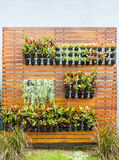Vertical garden Stock Photography