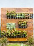 Vertical garden Stock Photography