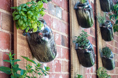 Vertical garden. In brick wall Royalty Free Stock Photography