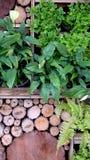Vertical garden design Stock Photos