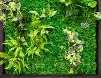 Free Vertical Garden Detail, Green Plants Wall In Office Or Home Interior Stock Photography - 214557282