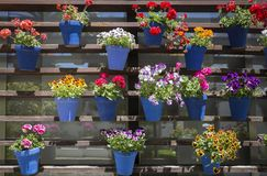 Vertical garden full of attached blue flower pots. Vertical garden full of geranium flower pots. Modern and traditional andalusian style stock photo