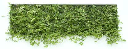 Vertical Garden Cutout Stock Photo