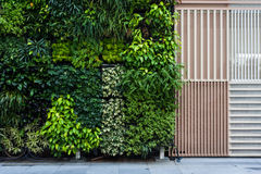 Vertical Garden Royalty Free Stock Photos