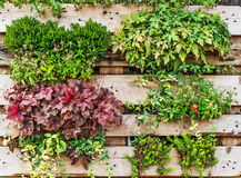 Vertical garden Stock Photos