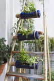 Vertical garden. A vertical garden made with recycled bottles Stock Photos