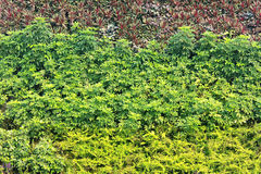 Vertical garden Royalty Free Stock Image