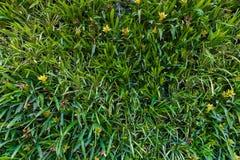 Vertical garden natural green leaf Royalty Free Stock Image