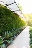 Vertical garden natural green leaf Stock Photo