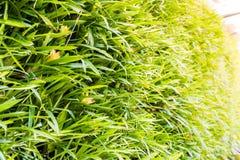 Vertical garden natural leaf Stock Photography