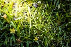 Vertical garden natural leaf Stock Photos