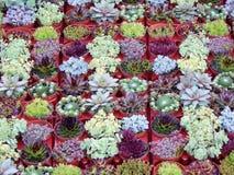 Vertical garden succulent plants. Vertical garden green plants Stock Photography