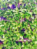Vertical garden Royalty Free Stock Photo