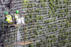 Vertical garden. Sao Paulo, SP, Brazil, April 08, 2017. Workers are installing the vertical garden on 23 de Maio Avenue, south of Sao Paulo. The plants replace Stock Images