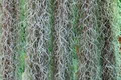 Vertical garden by spanish moss. Detail of vertical garden by spanish moss Stock Photo
