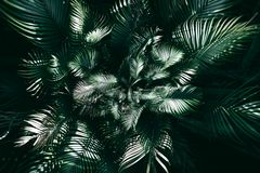 Vertical garden with tropical green leaf, Dark tone.  royalty free stock photography