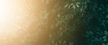 Vertical garden with tropical green leaf. Vertical garden with tropical green leaf, Dark tone with sunrise stock images