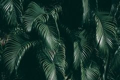 Vertical garden with tropical green leaf. Vertical garden with tropical green leaf, Dark tone royalty free stock photos