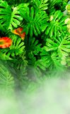 Vertical garden with tropical green leaf. Vertical garden with tropical green leaf with fog and rain royalty free stock images