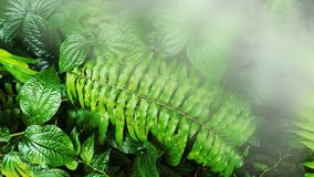 Vertical garden with tropical green leaf. Vertical garden with tropical green leaf with fog and rain royalty free stock photos