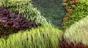 Vertical Garden of various plants Stock Image