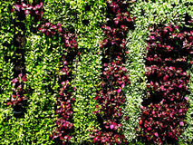 Vertical garden Royalty Free Stock Images