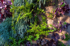 Vertical garden Royalty Free Stock Photography