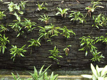 Vertical garden on water fall Royalty Free Stock Photography