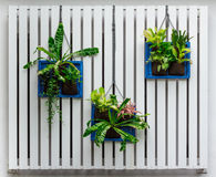 Vertical garden. On white wall Royalty Free Stock Images