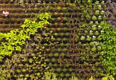 Vertical Gardening Royalty Free Stock Images