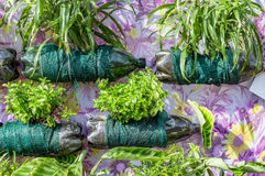 Vertical gardening with pop bottles Royalty Free Stock Photography