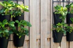 Vertical gardening Stock Image
