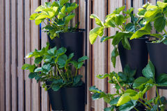 Vertical gardening Royalty Free Stock Photo