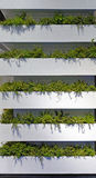 Vertical Gardens Royalty Free Stock Photography
