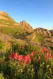 Vertical Golden sunrise with red wildflowers flowers, Utah. Royalty Free Stock Image