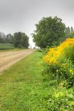 Vertical of goldenrod by roadside on early fall day Royalty Free Stock Photography