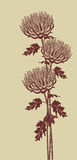 Vertical graphic image of chrysanthemums on a beige background Stock Photo