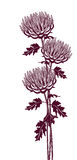 Vertical graphic image of chrysanthemums. On a white background Royalty Free Stock Images
