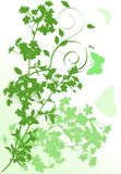 Vertical green cherry tree flowers illustration Royalty Free Stock Photography