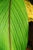 Vertical green leaf close up. View stock image