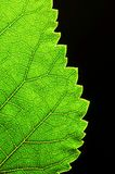 Vertical green leaf edge Stock Photography